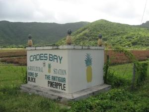 Black Pineapples Cades Bay Agricultural Station