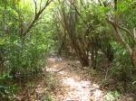 Antigua Hike Trails