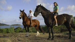 Horse Riding Tours Antigua