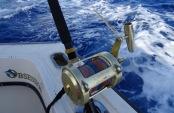Sea Fishing Antigua